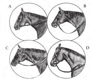 The bosal should be properly fitted relative to size and conformation of the Pinto. A complete Mecate rein, which includes a tie-rein, is mandatory with a bosal.
