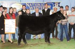 KRAMER LADY FAMILY TOP LINE LADY 9111 - The dam of Lots 1, 25, 34, 34A and 34B.