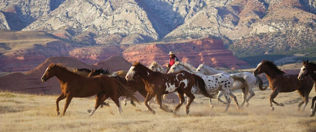 We re proud of our horses. Our Horses We believe our horses are as good as they get at a Western guest ranch.
