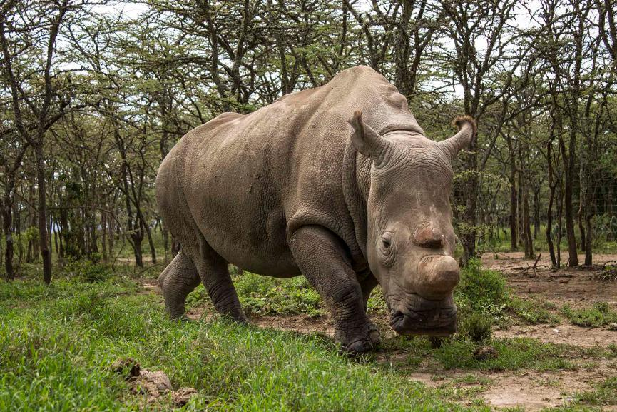 This is where the last four remaining Northern White rhinos in