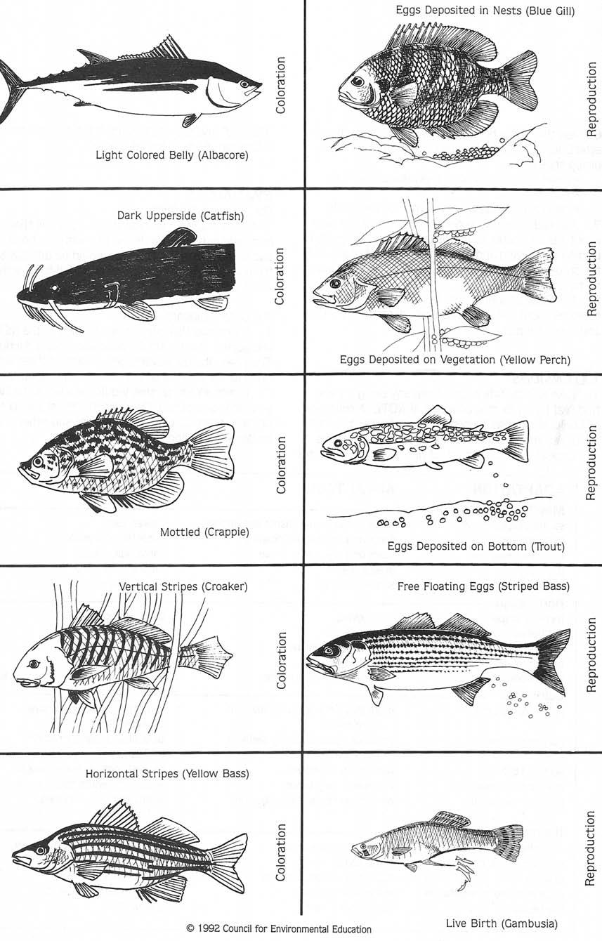 Fish Fashion Cards Student