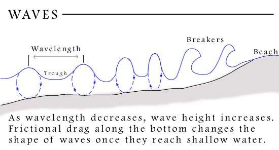 WAVES When a wave reaches shallow water, the lower part of the wave is slowed by the ocean floor, but the upper part continues at the same speed until it topples over.