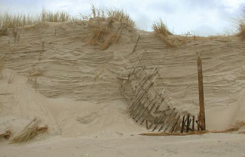 Sand Dunes (Continued) Wave erosion of dunes: Supplies sand to the offshore Creates a steep scarp at the base of the dune Dunes act as a natural barrier and prevent or reduce