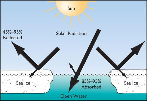 Sea Ice (Continued) The absence of sea ice during summer will allow open water to absorb more heat.