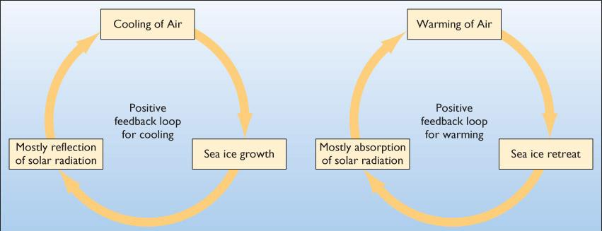 Increased water temperature: Delays onset of winter freezing Promotes an earlier spring breakup of sea-ice cover Figure 16.