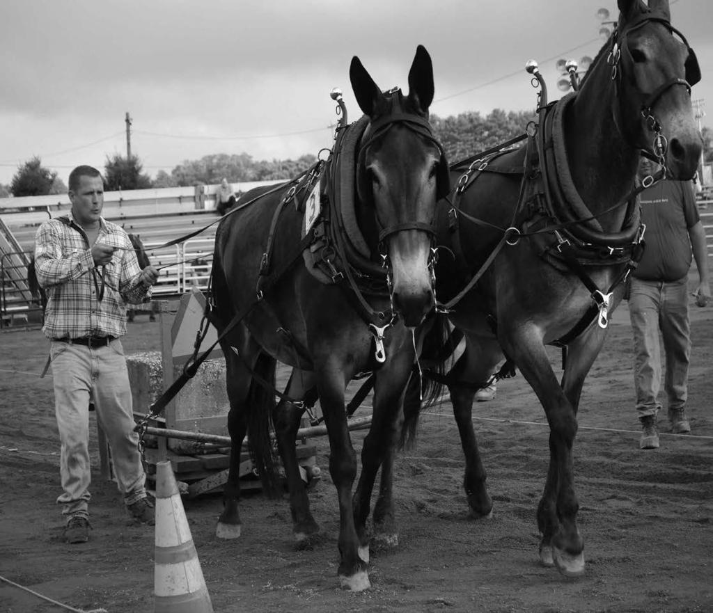 THIRTEENTH ANNUAL MULE PULLING CONTEST Chairperson - Mary E. F. Streaker (410-382-7135) Co-Chairperson - Daryl E. Collins (443-224-4193) Saturday, August 5 th 9:00 AM Contest Arena RULES!