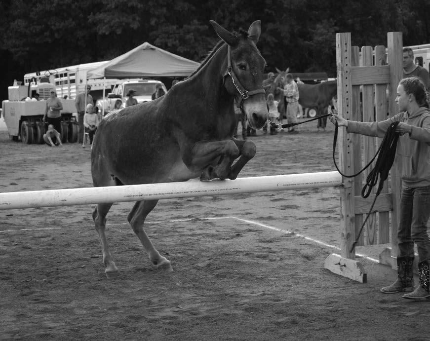 "7 th ANNUAL COON MULE JUMP Chairperson - Clint Thomas (443-277-4147) Saturday, August 5 TH immediately Following Mule Pull Contest Arena RULES! Two Classes: (1) 54"" & Under; and (2) Over 54""!"