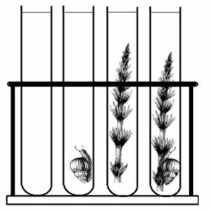 Interdependence of Plants and Animals 9. Fill each tube with pond water. 10. Place one snail each in test tubes 2, 4, 6, and 8. 11. Place one sprig of elodea in test tubes 3, 4, 7, and 8.