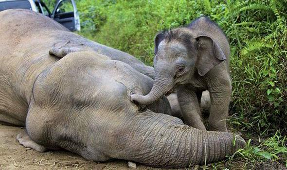 According to an article in the journal Conservation Biology in 2014, it has proven to be impossible to coordinate an effective, sustainable, and legalized trade in elephant ivory due to severe