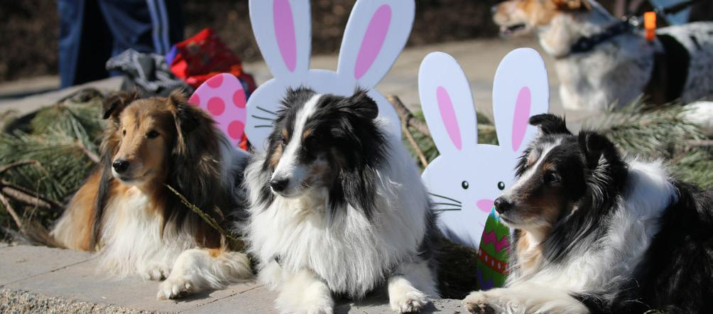 Canine Events Hound Egg Hunt March 26, 2016 10:00 11:30am Canine Carnival August 4, 2016 6:30 8:00pm Dog owners and their dogs will enjoy an egg hunt, souvenir photo with the bunny, and more.