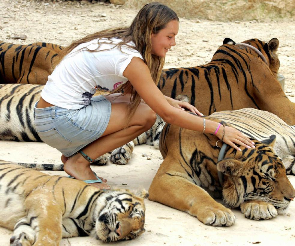 TIGERS TO BE FREED ADDITIONAL FACTS AND FIGURES IILLEGAL TRADE It is against the law to exchange or sell tigers.
