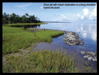 Rock Sill and Marsh Plants Photo