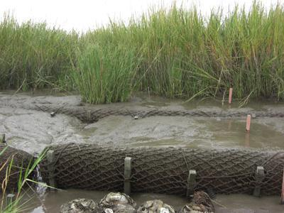 "Biolog Sediments are trapped by a barrier called a ""biolog,"" which allows marsh"