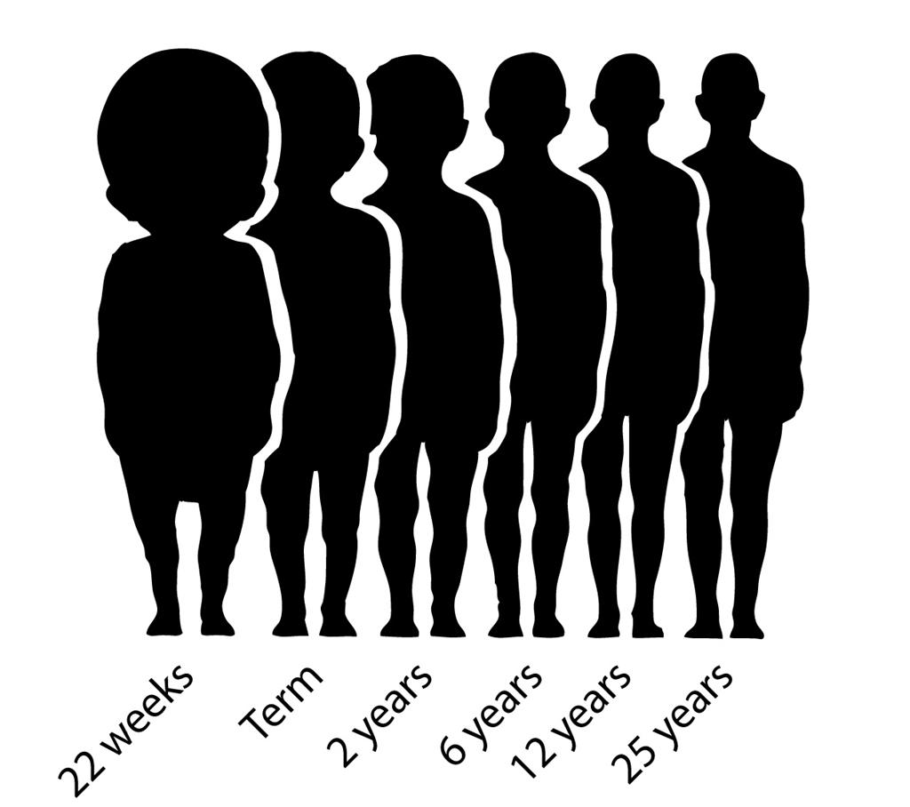 Proportional Brain Size and Development Brain growth (in terms of weight)