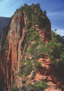 Guided Hikes Take advantage of your time in Zion to soak up all that this majestic land has to offer. Zion Ponderosa offers unique adventures for all skill levels.