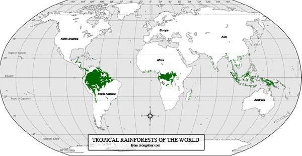 Rainforests of the World Most rainforests are near the equator