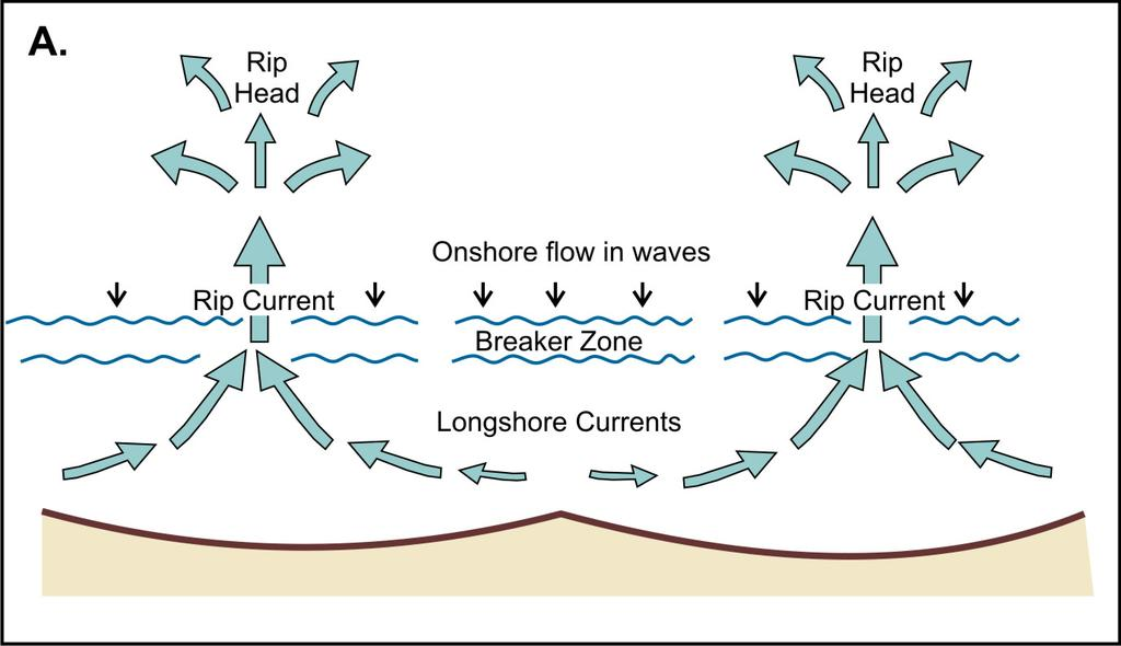 Rip Cells and Perpendicular Wave Approach Horizontal circulation patterns arising from roughly perpendicular wave approach, that include alongshore-directed currents on