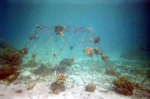 3. BOAT REEF RESTORATION PROJECT The boat is the longest and lowest structure, and is receiving the least current because it is furthest from the power source and has no anode of its own, relying on