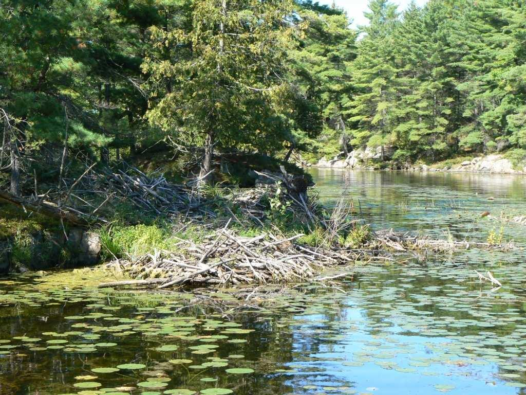 OBSERVATIONS STREAMS AND RIVERS There are a total of 35 streams connected to Ston(e)y and Clear Lakes, including Eel s, Jack s, Perry s and Julia Creeks, and two outflows via the Indian and Otonabee