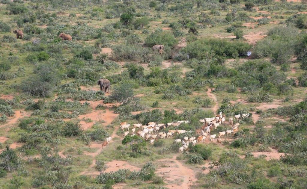 MAY 2016 MONTHLY AERIAL SUMMARY In Northern Tsavo East, towards the eastern boundary within the Ndia Ndaza area the supercub sighted many cattle enclosures which had been constructed by herders