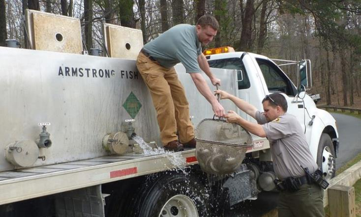 in western NC Fish are transported from truck