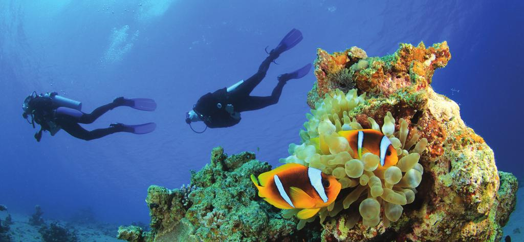 Certified divers visiting Oman are sure to find a spectacular range of dive destinations along this beautiful coastline, with its many offshore islands and reefs.