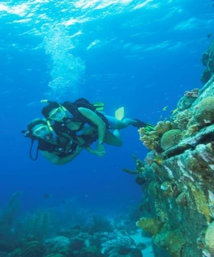 DIVING Dive Excursions Our watersport offer some of the best dive excursions to Catalina Island, Samana, Bayahibe and some other interesting spots around the island.