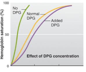 Hb Saturation Effects of DPG Concentration P O2 (mmhg) 2,3-diphosphoglycerate (DPG) Always produced by RBCs Increase in DPG causes a shift to the right RBCs increase