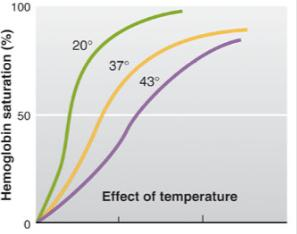 Hb Saturation Effects of Temperature P O2 (mmhg) Higher temperature in tissue capillary blood than in arterial blood The more metabolically