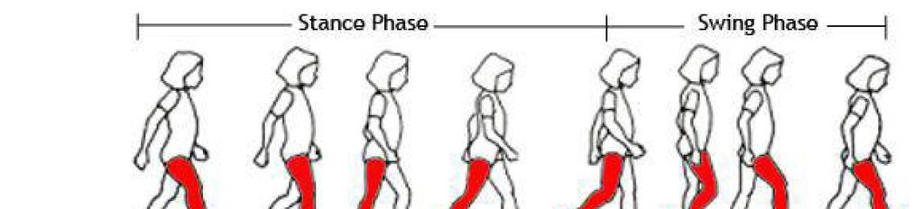 Figure 1: Gait Phases increase our understanding of normal gait, few gait models have been provided and most of them have been limited to swing phase (Luis et al.