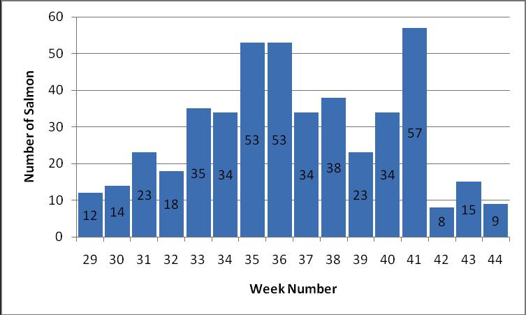 The catch of salmon generally increased from week 29 to week 36 and decreased after week 41, fig 4.2.2. Locatio n Number of Salmon 1 2 3 4 5 Al 6 6 12 17 2 45 l 5 5 5 5 9 9 Table 4.