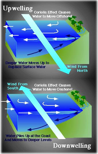 The Ekman mechanism is also responsible for coastal upwelling and downwelling.