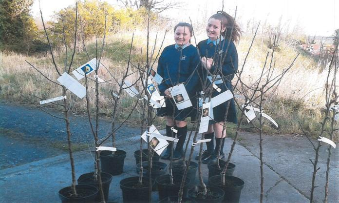 All schools and projects have been given the background history of each species, where it comes from such as Ecklinville Seedling discovered in Portaferry,