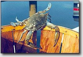 Results Participation Residential Participation (Tri-County only): 9.4% of resident households, nearly 11,000, participated in crabbing in 2005 * Cape May county residents participated most, with 10.