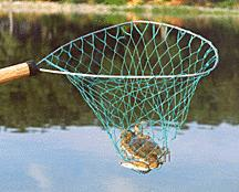 surveys conducted in the 1970 s concluded: More effort expended in catching crabs than any other species 75% of