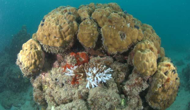 in shallow waters, especially soft corals, massive coral looked good.