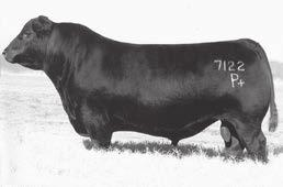 Tanner Angus Bulls 50 DUFF JETSET 7122 - The sire of Lots 48, 49 and 50. MOHNEN SOUTH DAKOTA 402 - The sire of Lot 52 and 53.