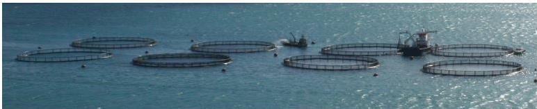 Activities in the field of AQUACULTURE Formulation of advice on the following aspects: (i) sustainable management of coastal lagoons; (ii) use of regional indicators to monitor sustainable