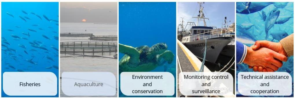 The role of the GFCM Objective: To ensure the conservation and sustainable use, at the biological, social, economic and environmental level, of living marine resources.