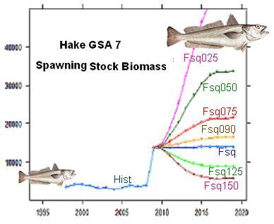The SPAWNING STOCK BIOMASSES would return above reasonably safe levels by a strong reduction in fishing mortality.