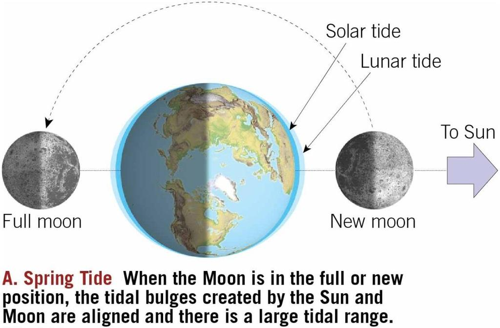 Tides Spring tide During new and full moons Gravitational forces