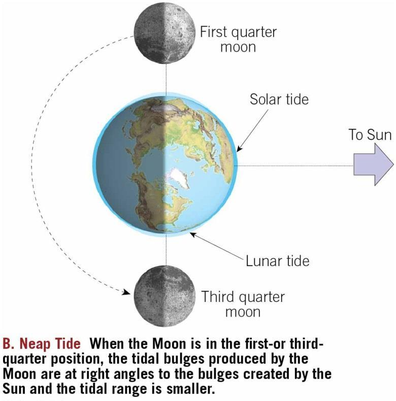 Tides Neap tide First and third quarters of the Moon