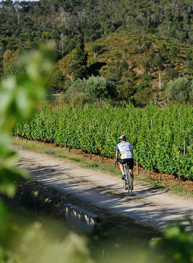 SUBLIME RIDES DIVINE FOOD FINE WINE Slow down and enjoy the ride Bacchus on Bikes design and lead tailor-made cycling holidays for all levels of cyclist through the Empordà region of Catalonia and