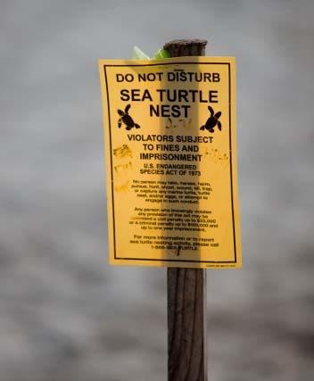 Regulatory Wildlife Concerns Alabama beaches are nesting areas for endangered shore birds and sea turtles