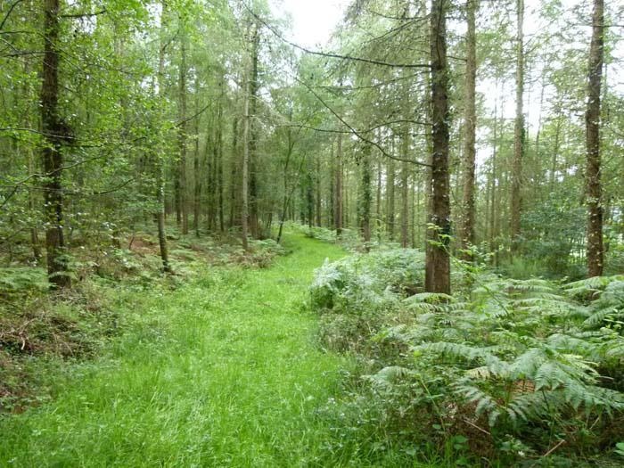 WOODS 4 SALE Phone: 01248 364 362 www.woods4sale.co.