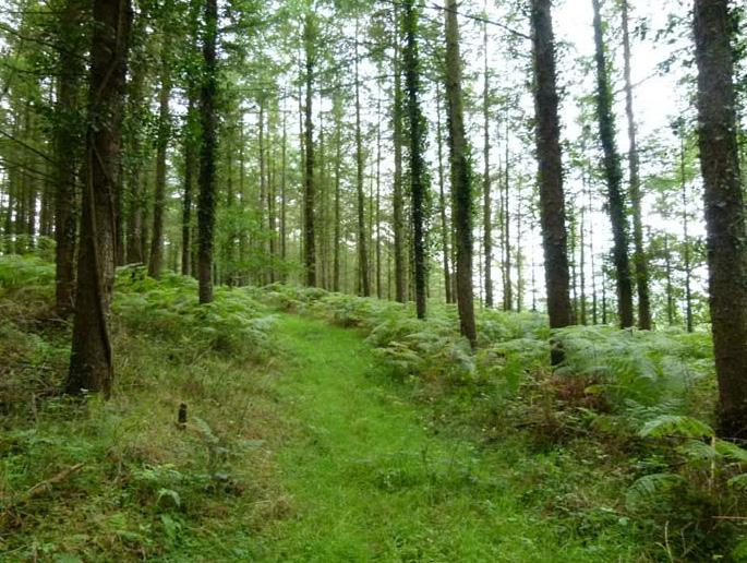 Sound timber growing woodlands like Slew Wood represent very attractive medium term investments.
