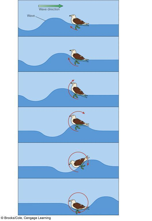 Motion of water in a wave is circular Motion