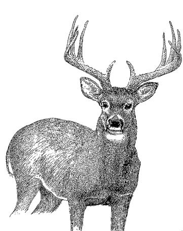 18 DEER HUNTING DEER PERMITS & LICENSES Muzzleloader Permit Muzzleloader means a firearm that is capable of being loaded only through the muzzle; is ignited by a matchlock, wheel lock, flintlock, or