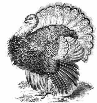 22 WILD TURKEY HUNTING Wild Turkey Hunting Anyone who possesses a big game or small game firearms license or archery license may obtain a combination spring/fall wild turkey permit.