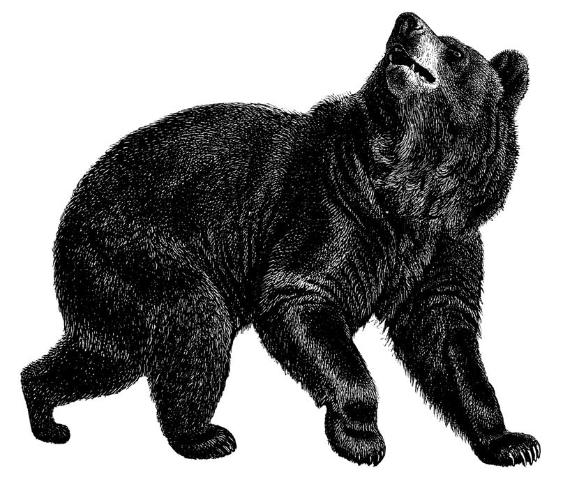 26 BEAR TRAPPING Bear Trapping BEAR TRAPPING PERMIT A bear trapping permit and a trapping license is required to set a trap for a bear during the annual bear trapping season (September 1 - October